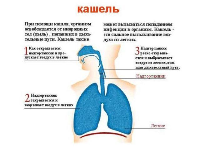 Лечение кашля у детей народными средствами: как быстро вылечить сухой кашель?