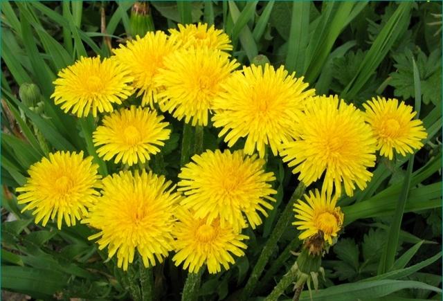 Лечение геморроя травами в домашних условиях