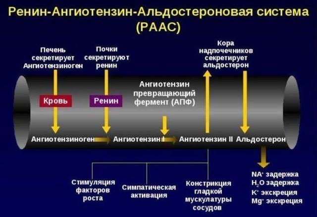 Причины, симптомы и лечение гипотонии