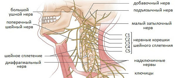 Что делать при защемлении нерва в шейном отделе